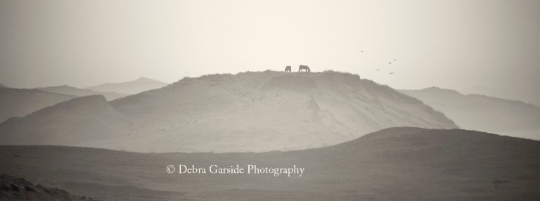 Sable Island Wild Horses - Over the Hills Far Away