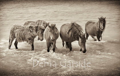 Sable Island Wild Horses - Beach Party