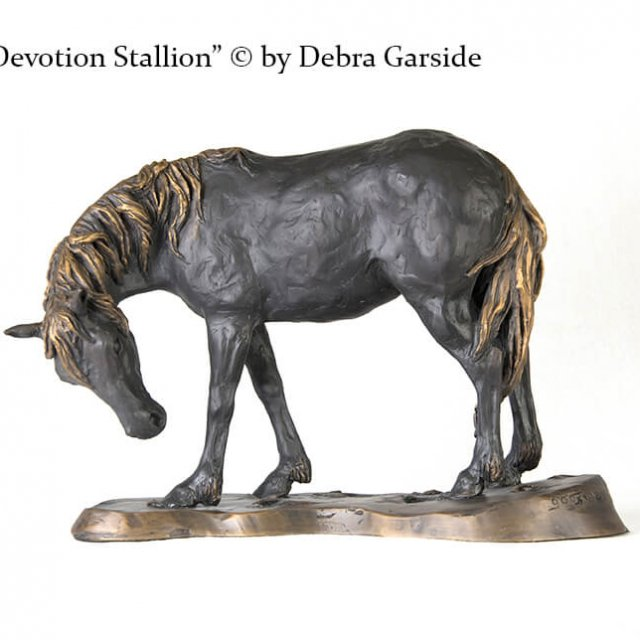 Devotion Stallion
