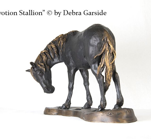 Devotion Stallion rotated
