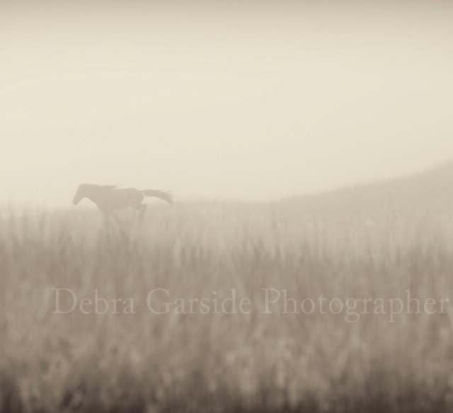 Sable Island Wild Horses - Fogbound
