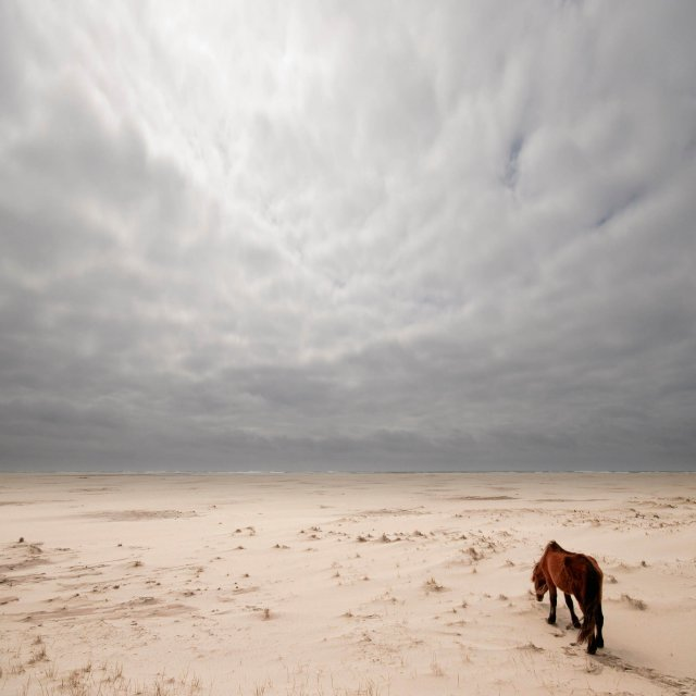Sable Island Wild Horses - Journey's End