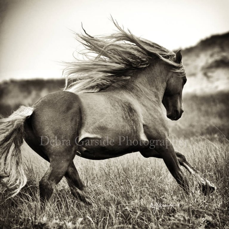 Sable Island Wild Horses - Power Speed