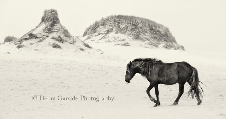 Sable Island Wild Horses - Sands of Time