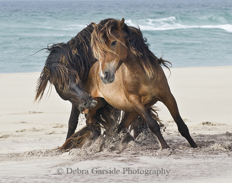 The Tempest - Sable Island