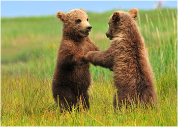 Cubs Holding Hands