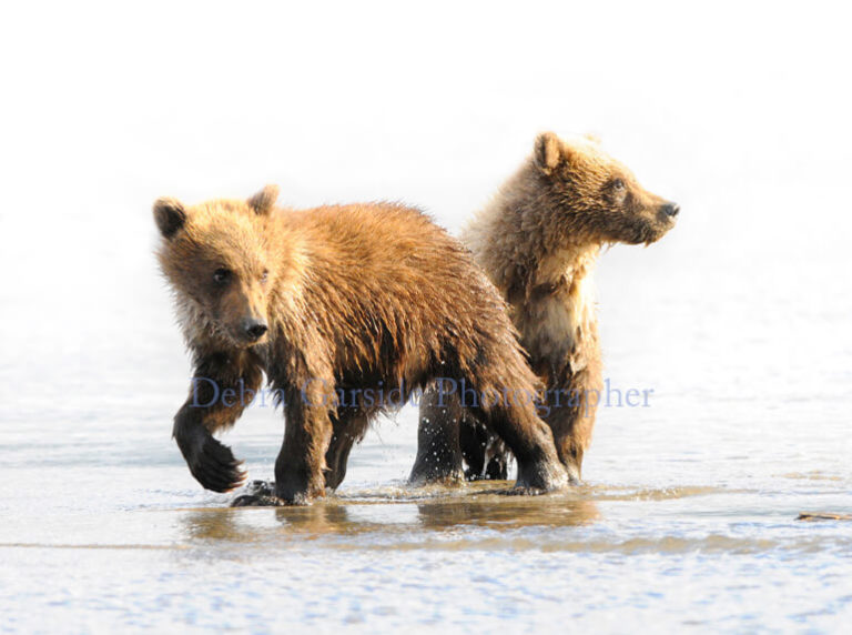 Kodiak Kids II