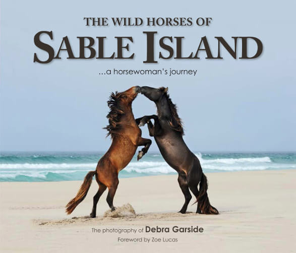 Wild Horses of Sable Island book cover