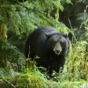 April - Great Bear Rainforest
